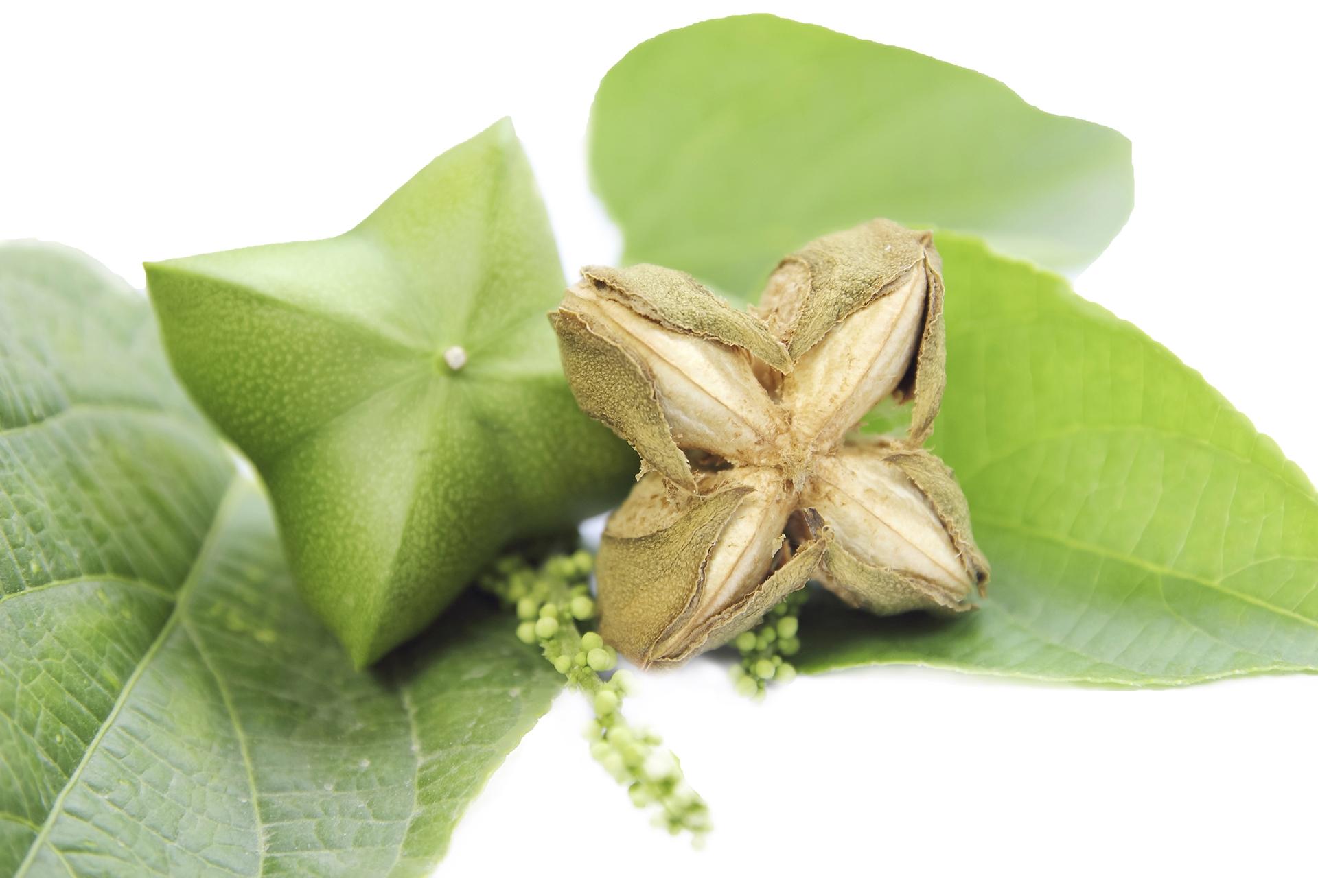Plukentia volubilis seed oil